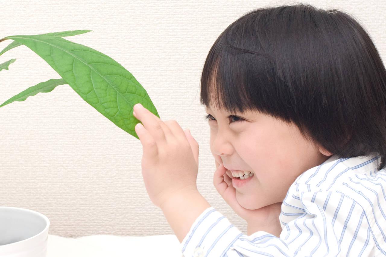 子どもと楽しめる水耕栽培!初めてでも育てやすい植物と育て方