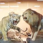 【大阪】迫力満点の学び場所「きしわだ自然資料館」