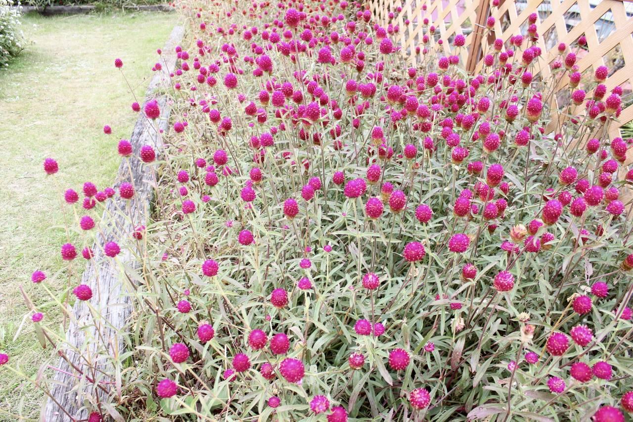 【大阪】花のテーマパークに出かけよう!「花の文化園」