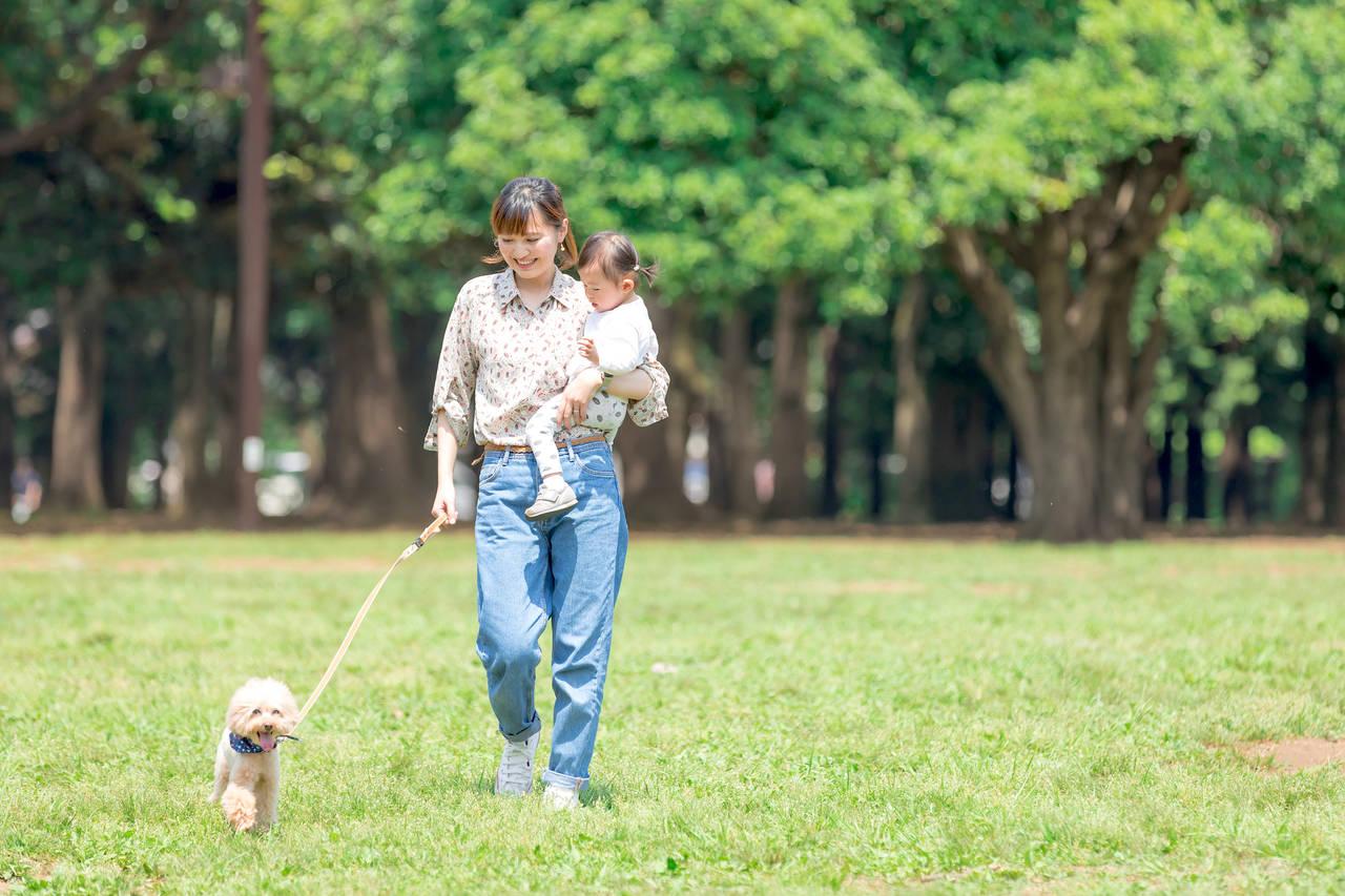 幼児と犬との散歩中の関わり方!触れ合うときのメリットと注意点