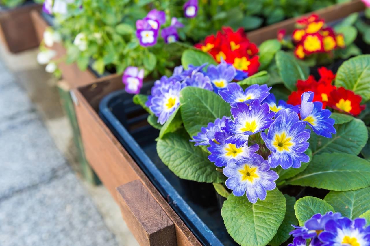 ガーデニングでママ友作り!育てやすい植物や仲間を増やすツール