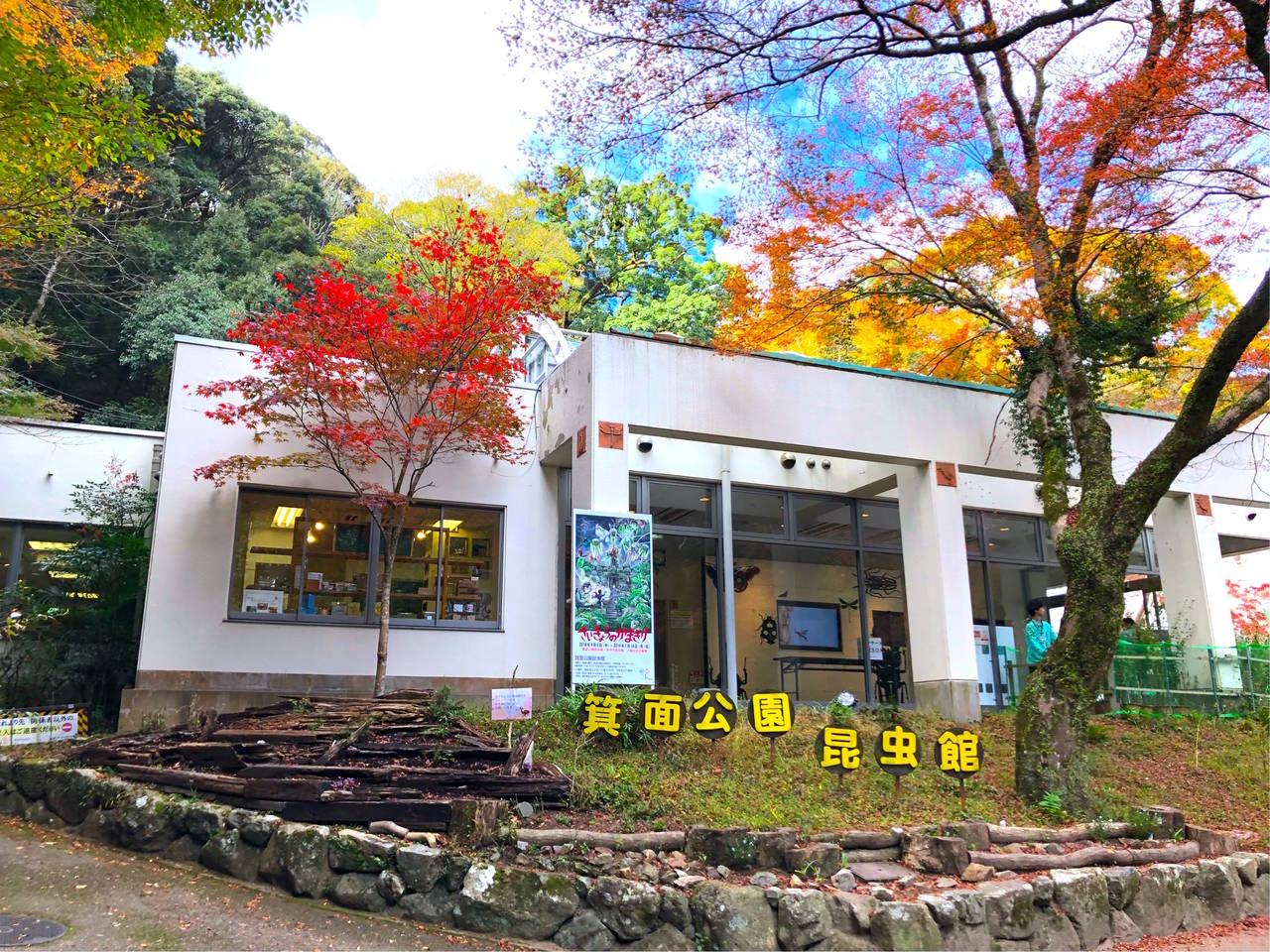 【大阪】いろんな昆虫たちと出会える!「箕面公園昆虫館」