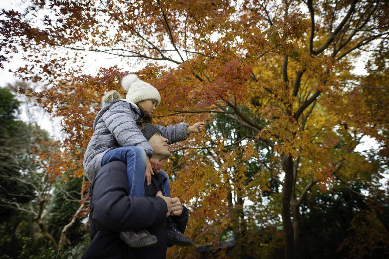 千葉の紅葉と子連れスポットの情報が満載!自然の中で家族と楽しむ