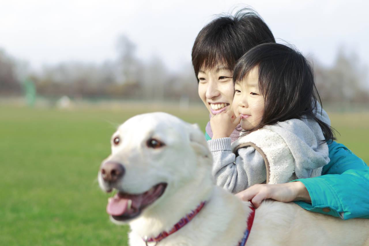 子どものお世話と犬のお散歩の時間はどうする?両立させるためのコツ