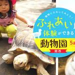 【関西】動物にさわってみよう!ふれあい体験ができる動物園5選
