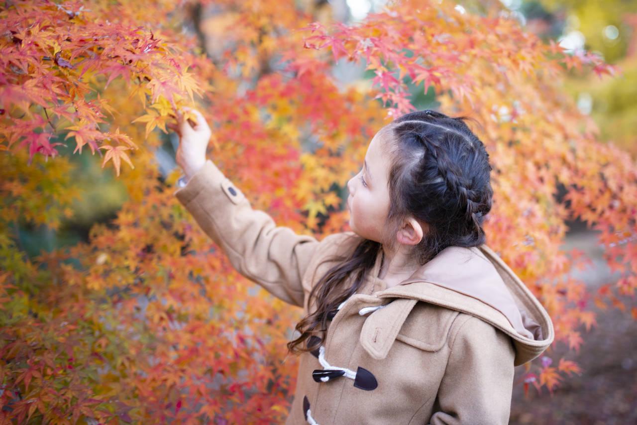 子連れで紅葉が楽しめる関東のスポットは?子どもと自然を楽しもう