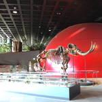【兵庫】親子で一緒に学ぶ博物館「兵庫県立  人と自然の博物館」