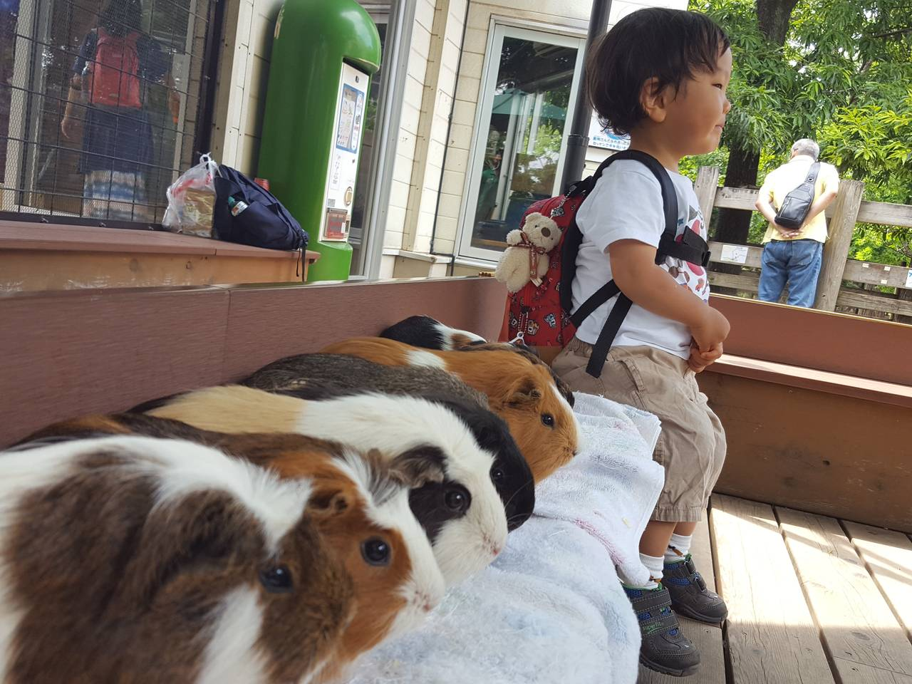 【東京】モルモットやウサギたちとふれあおう「足立区生物園」