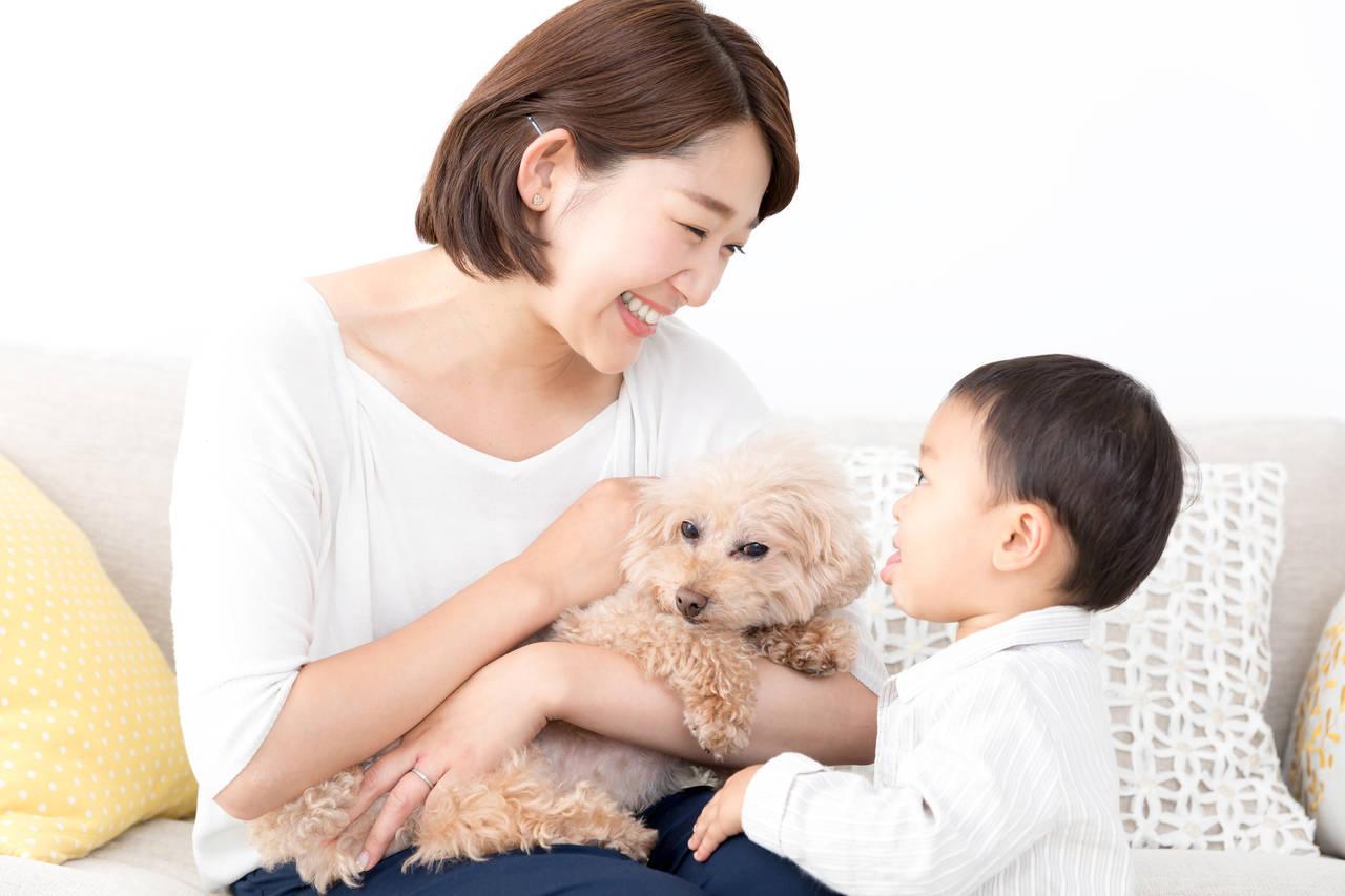 犬の散歩中に子どもだけの留守番は危険?工夫をして愛犬を可愛がろう