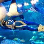 【東京・品川】毎日行われる四つのショーは必見「しながわ水族館」