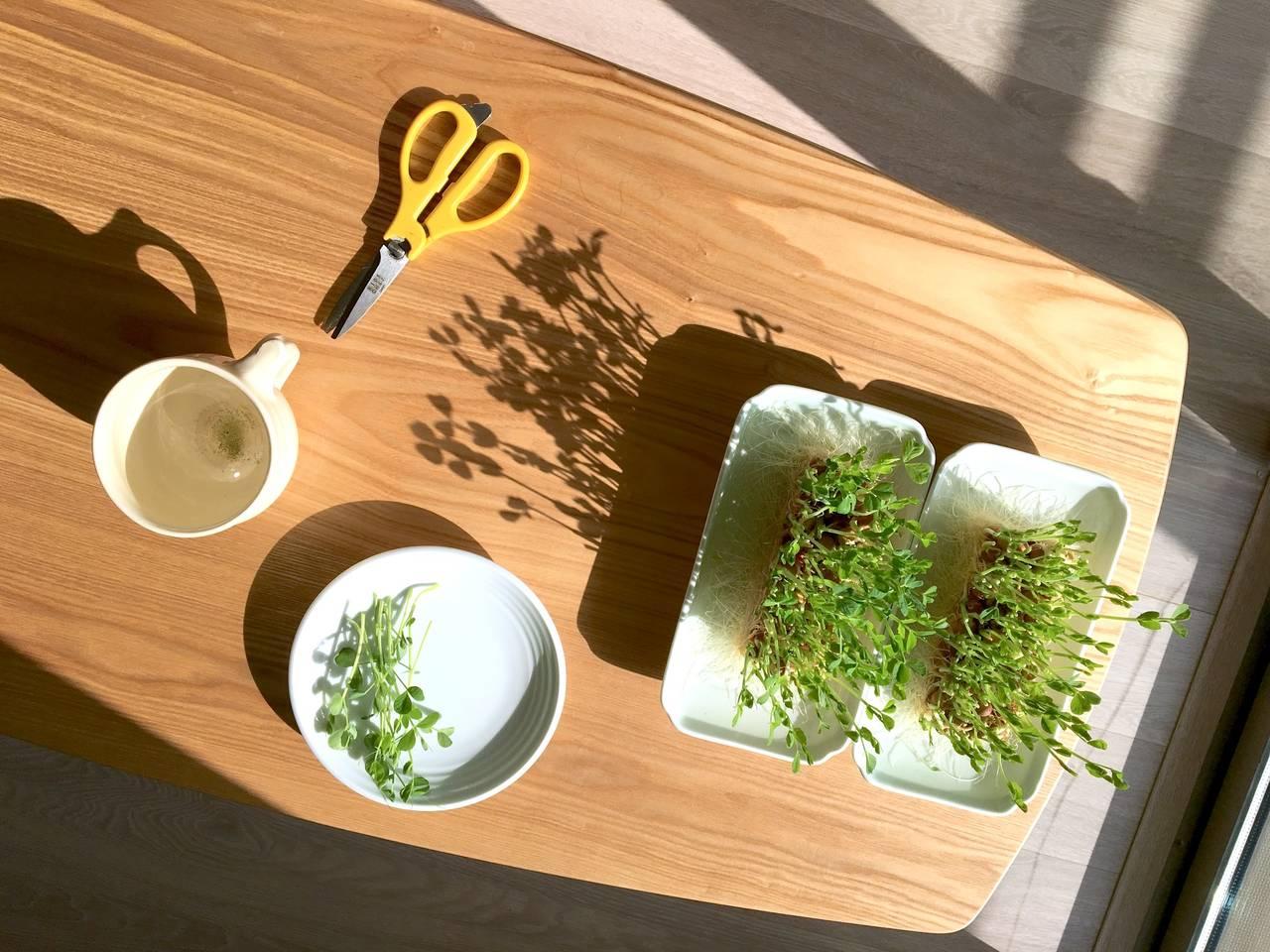 高価な装置なしで始める水耕栽培!親子でも楽しめる家庭菜園の方法