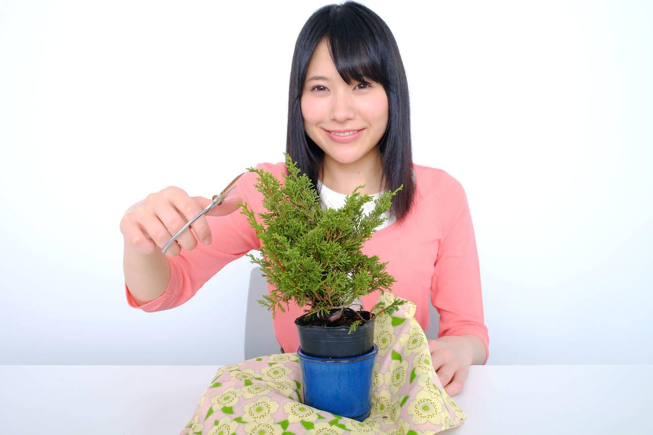 趣味として注目されている盆栽!ママにぴったりな理由と始めるコツ
