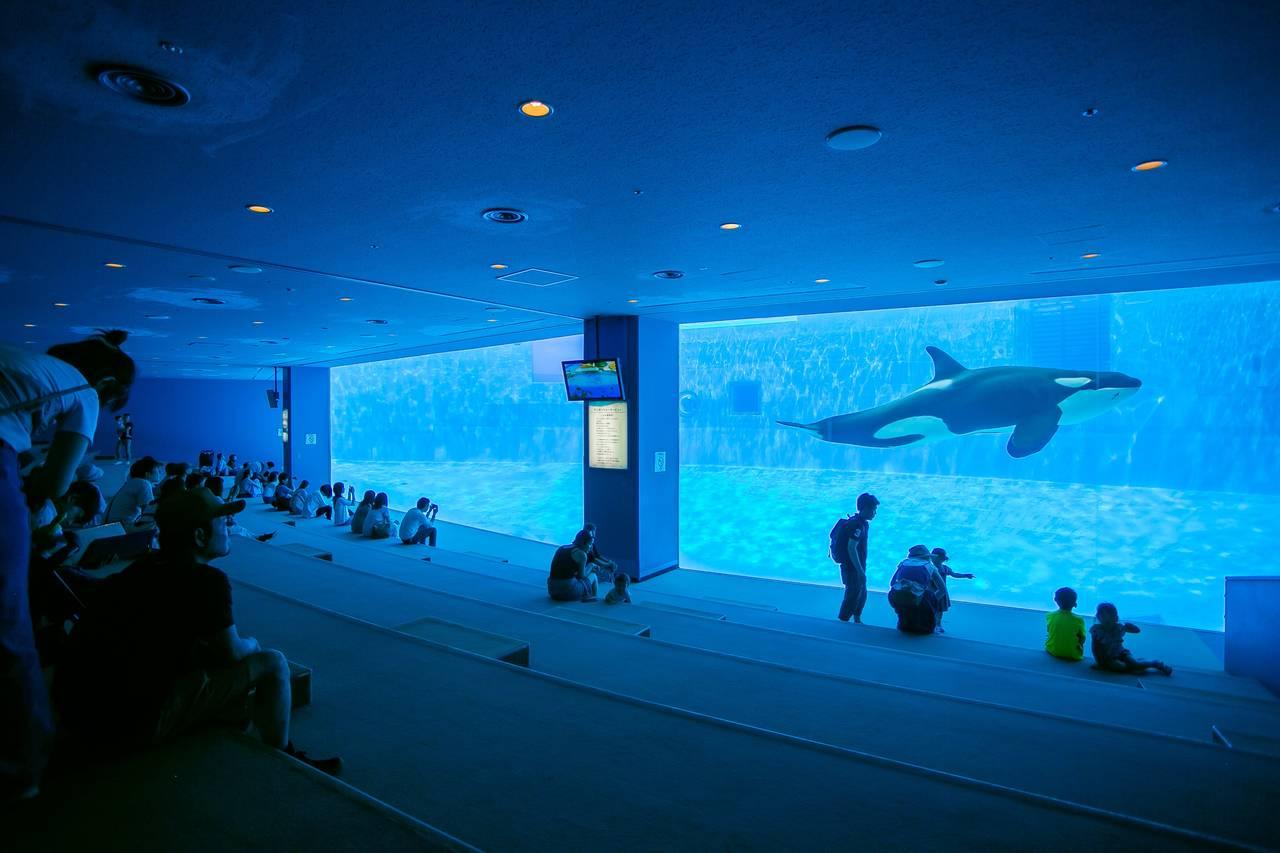 【愛知】親子で楽しめる触れ合いイベントも充実!「名古屋港水族館」