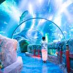 【愛知】「シーライフ名古屋」で、レゴとコラボした海の探検へ!