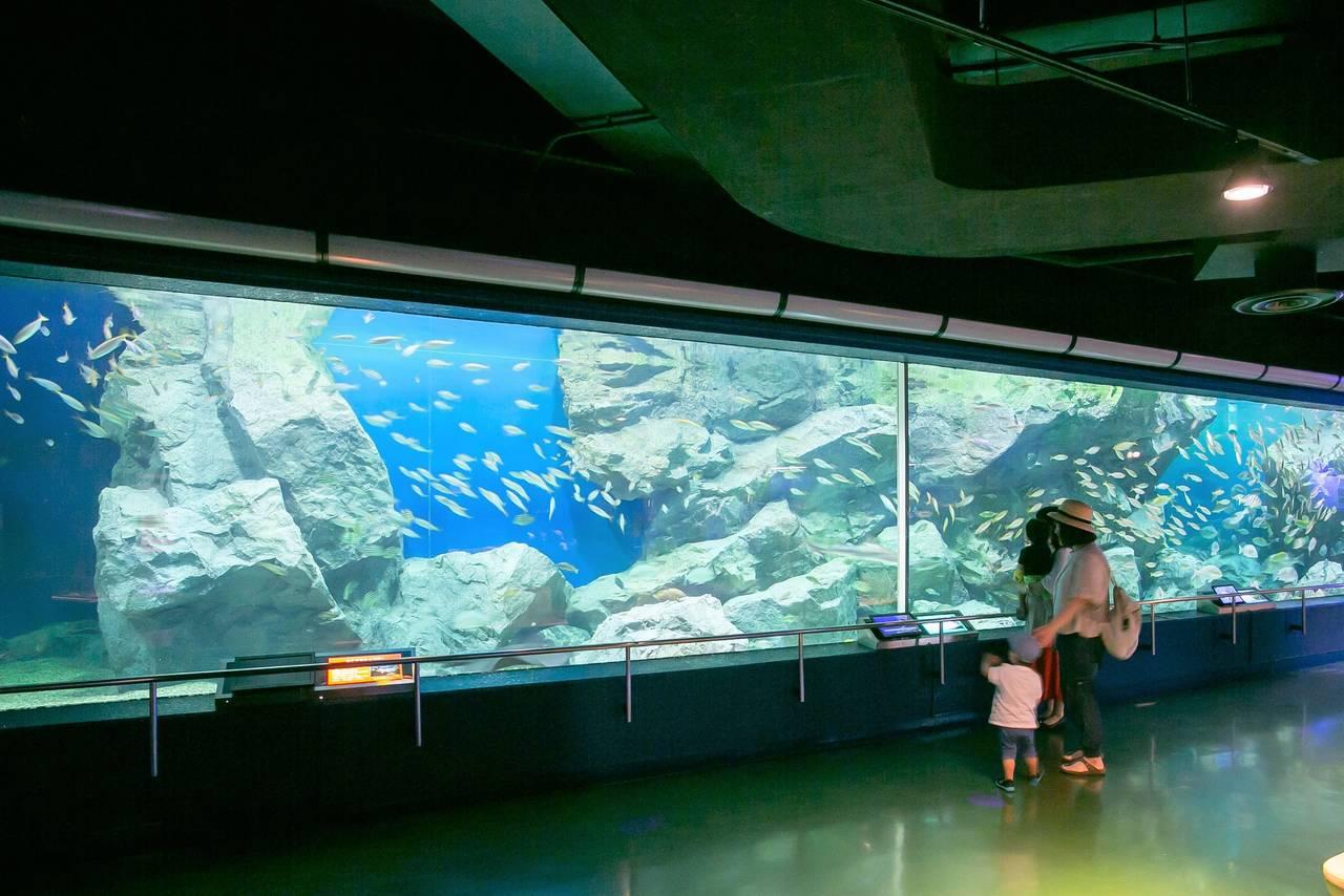 【愛知】発見がいっぱい!地元で愛される「碧南海浜水族館」