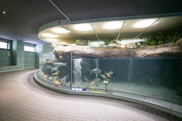 【愛知】地元に生きる魚とかわいい動物に会える「ぎょぎょランド」