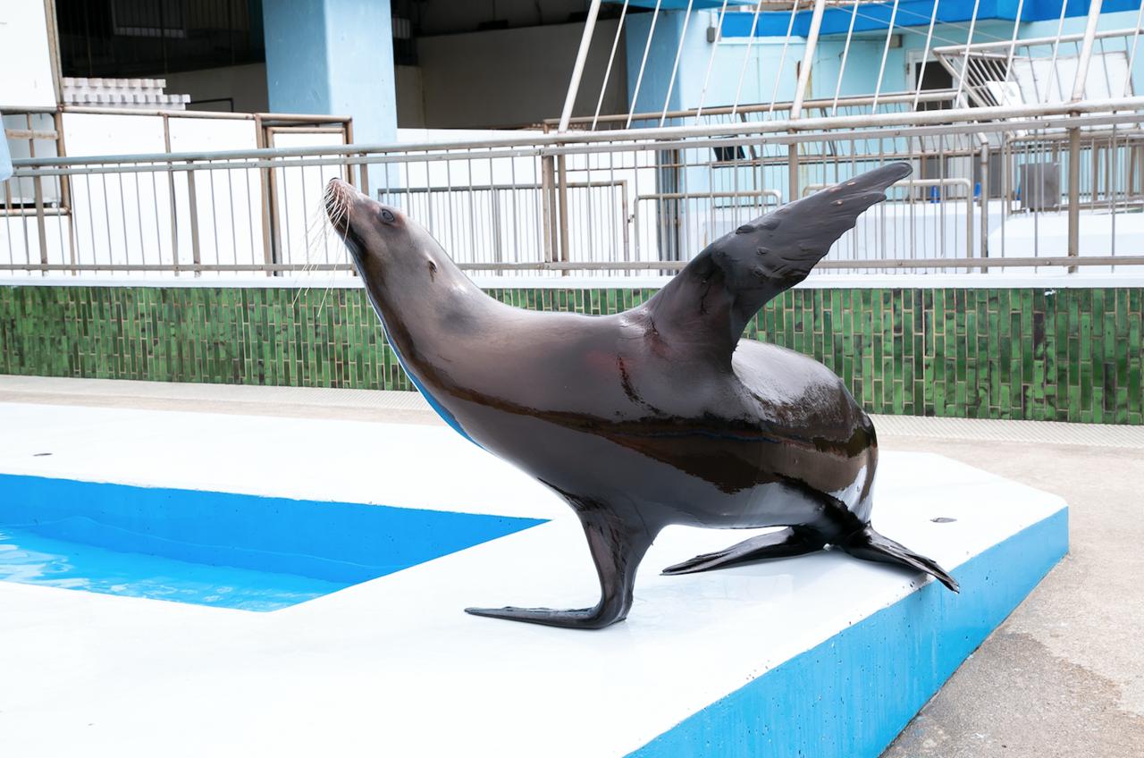 【愛知】身近な海の生き物に触れ合える「南知多ビーチランド」