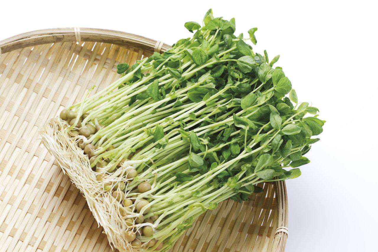 豆苗を上手に保存して毎日食べよう!ママに嬉しい栄養豊富なレシピ