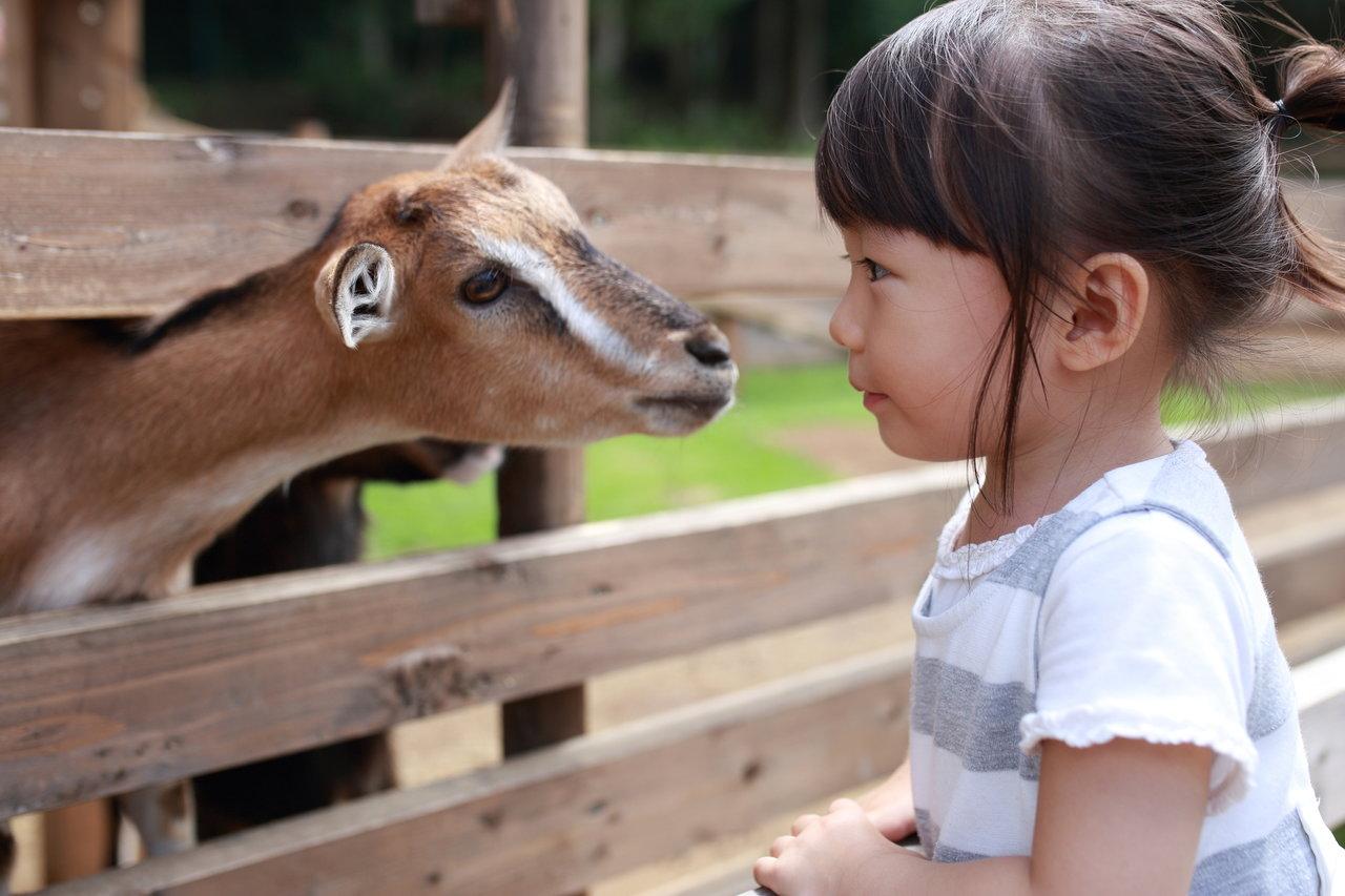 九州の動物園へ出かけよう!子どもと楽しむための注意点も紹介