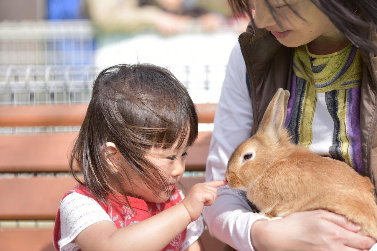 東海で訪れたい必見の動物園はどこ?動物に触れ合えるスポットも紹介