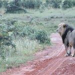 子連れのサファリ旅行記!野生の動物に会えるおすすめスポット