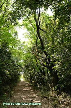 トトロの森の紹介|公益財団法人 トトロのふるさと基金