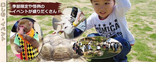 ワールド牧場|大阪府南部のふれあい観光牧場