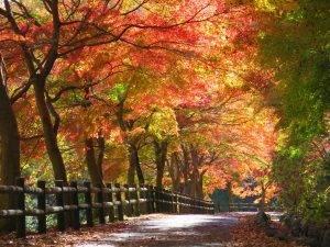 秩父ミューズパーク | 埼玉県秩父市と小鹿野町にまたがる自然豊かなテーマパーク