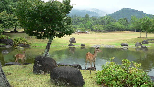 奈良公園クイックガイド