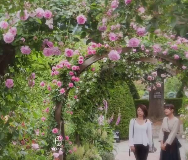 箱根の観光 箱根強羅公園 (季節の花、点茶体験、陶芸・吹きガラス体験、植物館)