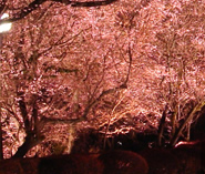 城峯公園   神川町観光協会