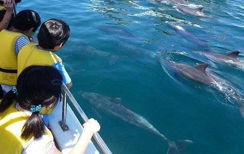 かづさイルカウォッチング|観光スポット|【公式】長崎観光/旅行ポータルサイト ながさき旅ネット