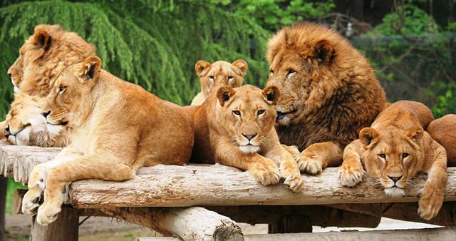 野生の王国 群馬サファリパーク