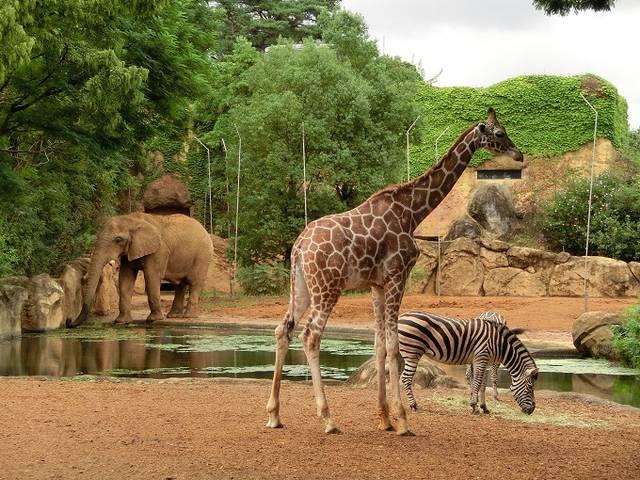 仙台市八木山動物公園トップページ