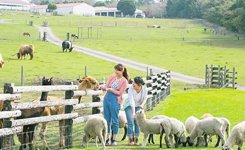 マザー牧場|花と動物たちのエンターテイメントファーム
