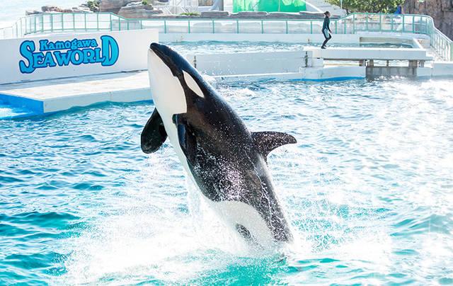 <公式>鴨川シーワールド-東京・千葉の水族館テーマパーク