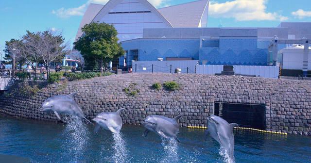 いおワールドかごしま水族館 | ジンベエザメやサツマハオリムシなど錦江湾から南西諸島の生き物500種3万点を展示する鹿児島市の水族館、いおワールド。