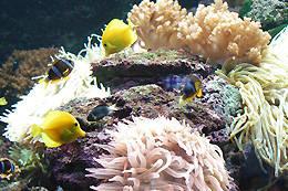 串本海中公園 | 海と水族館を丸ごと楽しめる複合施設