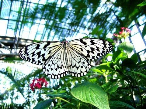 橿原市昆虫館 | 橿原市公式ホームページ(かしはらプラス)