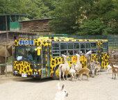 東北サファリパーク - 世界各国から様々な動物たちが大集合!