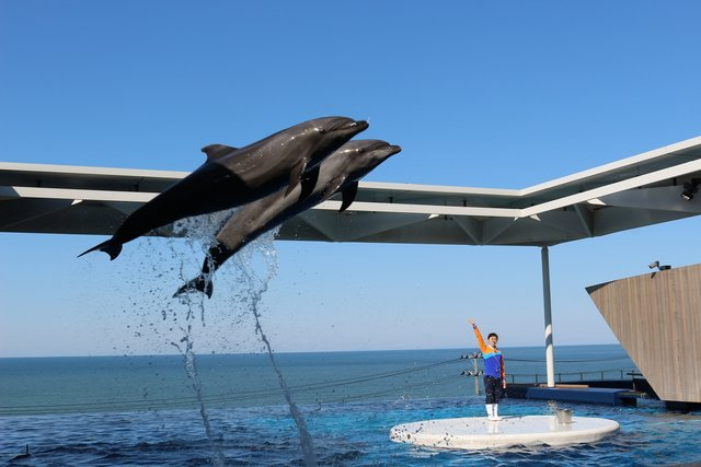 ☆上越市立水族博物館 うみがたり キミと日本海の物語がはじまる。 | 上越市立水族博物館 うみがたり