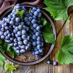 あなたはいくつ知ってる?色々な種類のブドウをご紹介!