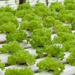 最新テクノロジーで食糧自給率アップ!未来の食卓を守るLED菜園