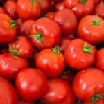 「トマトが赤くなると医者が青くなる」そんなトマトの栄養と美味しい食べ方