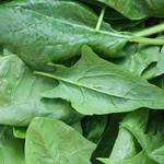 女性に嬉しい栄養素たっぷり!ほうれん草が緑黄色野菜の王様たる所以とは?