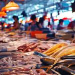初夏が旬の魚は冬に不足しがちな栄養を補ってくれる?5月が旬の魚3選