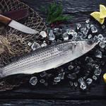 「ぼら」は縁起がいい出世魚!知る人ぞ知る、「寒ぼら」の美味しさって?