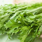 京菜を知らない?実はみんなも知ってる有名な葉野菜の正体とは…?
