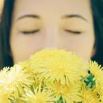 たんぽぽの葉を食べよう!美味しい食べ方・女性にうれしい効能とは