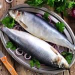 これからが旬!ハレの日にピッタリな春の訪れを告げる魚について